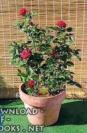 ❞ كتاب نباتات زينة ❝  ⏤ احمد المغربى