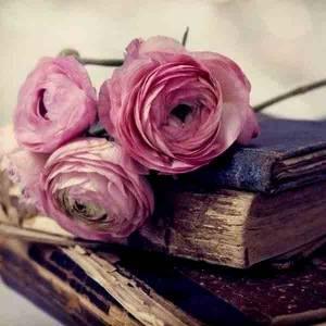 قراءة و تحميل كتاب شعر النقائض PDF